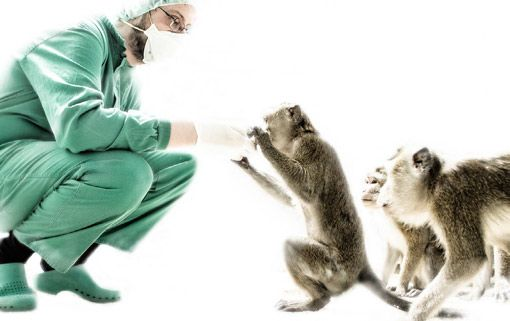 Non-Human primates services